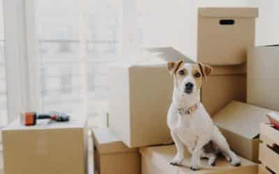 Un déménagement pensé pour les animaux