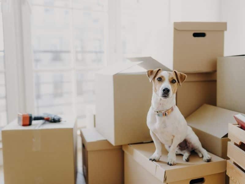 déménagement pensé pour les animaux